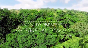 How to preserve the tropical forest ?